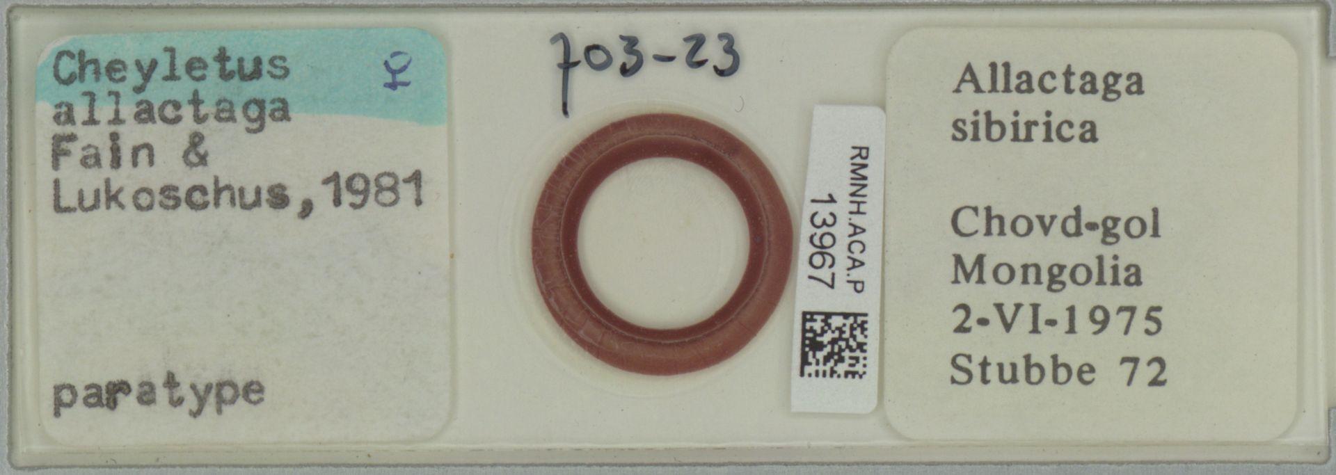 RMNH.ACA.P.13967 | Cheyletus allactaga Fain & Lukoschus, 1981