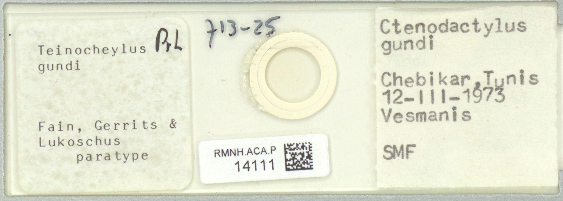 RMNH.ACA.P.14111   Teinocheylus gundi Fain, Gerrits & Lukoschus