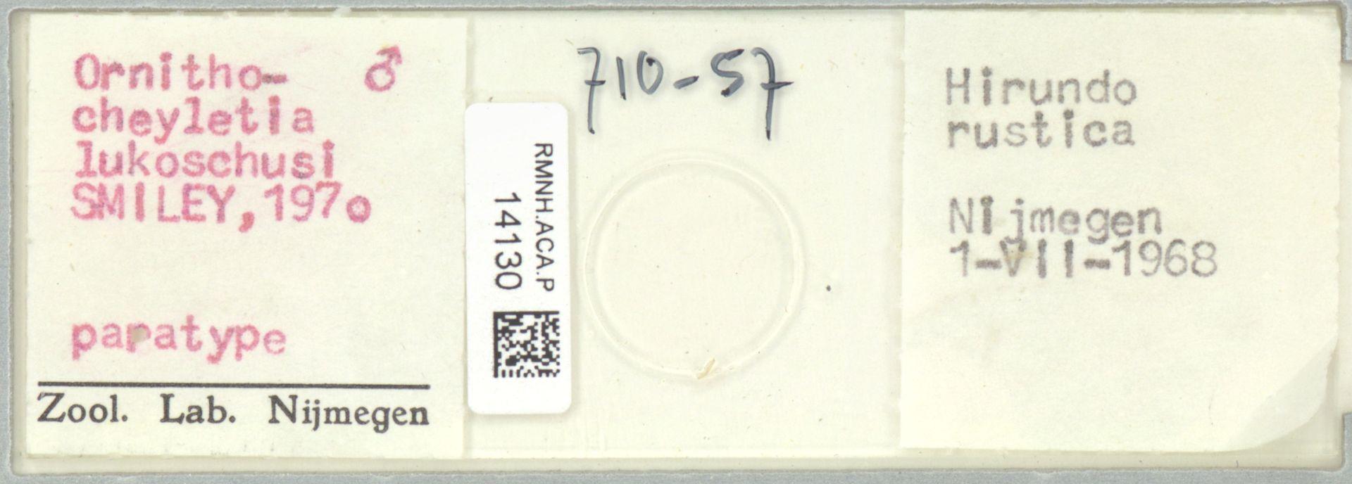 RMNH.ACA.P.14130 | Ornithocheyletia lukoschusi Smiley, 1970