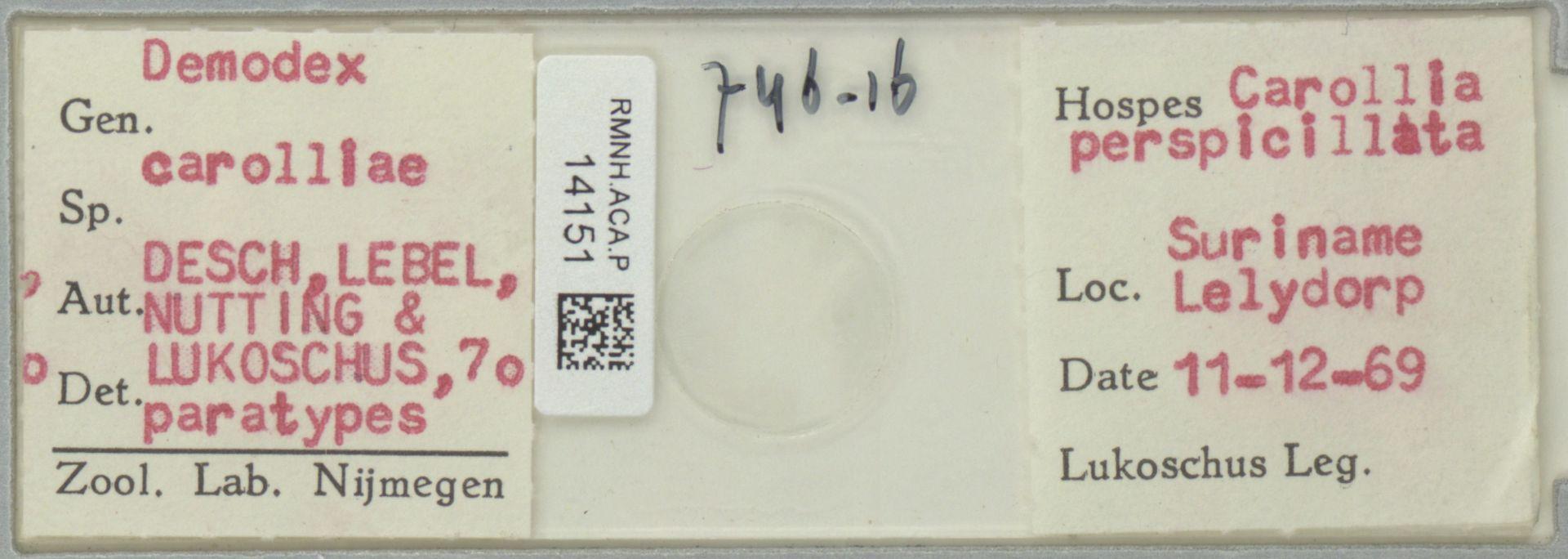 RMNH.ACA.P.14151 | Demodex carolliae