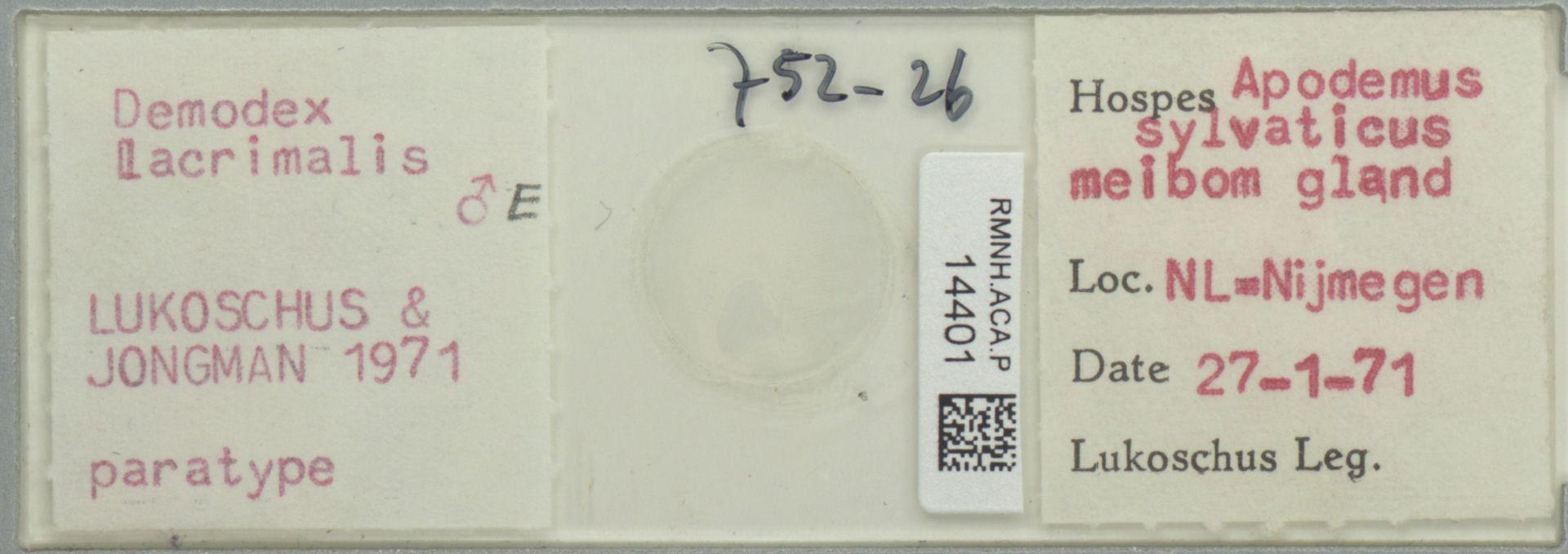 RMNH.ACA.P.14401 | Demodex lacrimalis Lukoschus & Jongman, 1971
