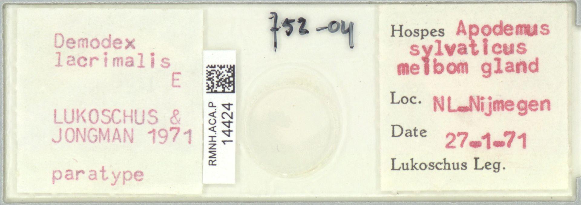 RMNH.ACA.P.14424 | Demodex lacrimalis Lukoschus & Jongman, 1971
