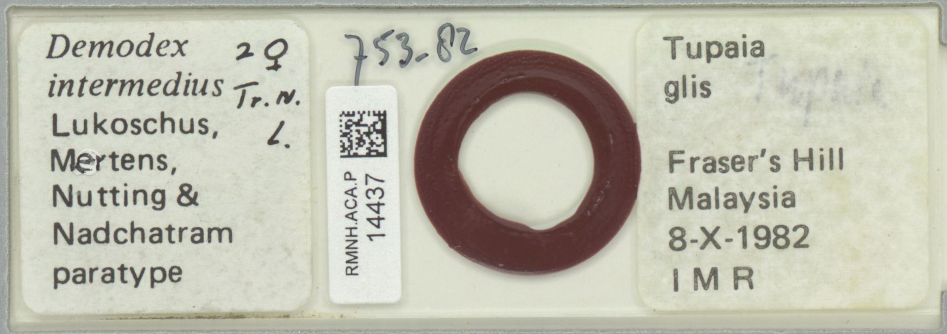 RMNH.ACA.P.14437 | Demodex intermedius Lukoschus, Mertens, Nutting & Nadchatram