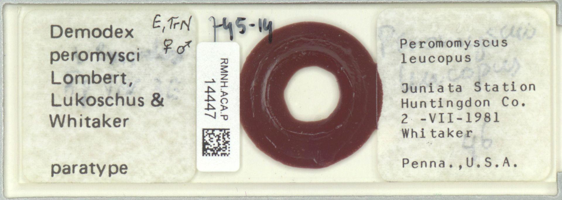 RMNH.ACA.P.14447 | Demodex peromysci