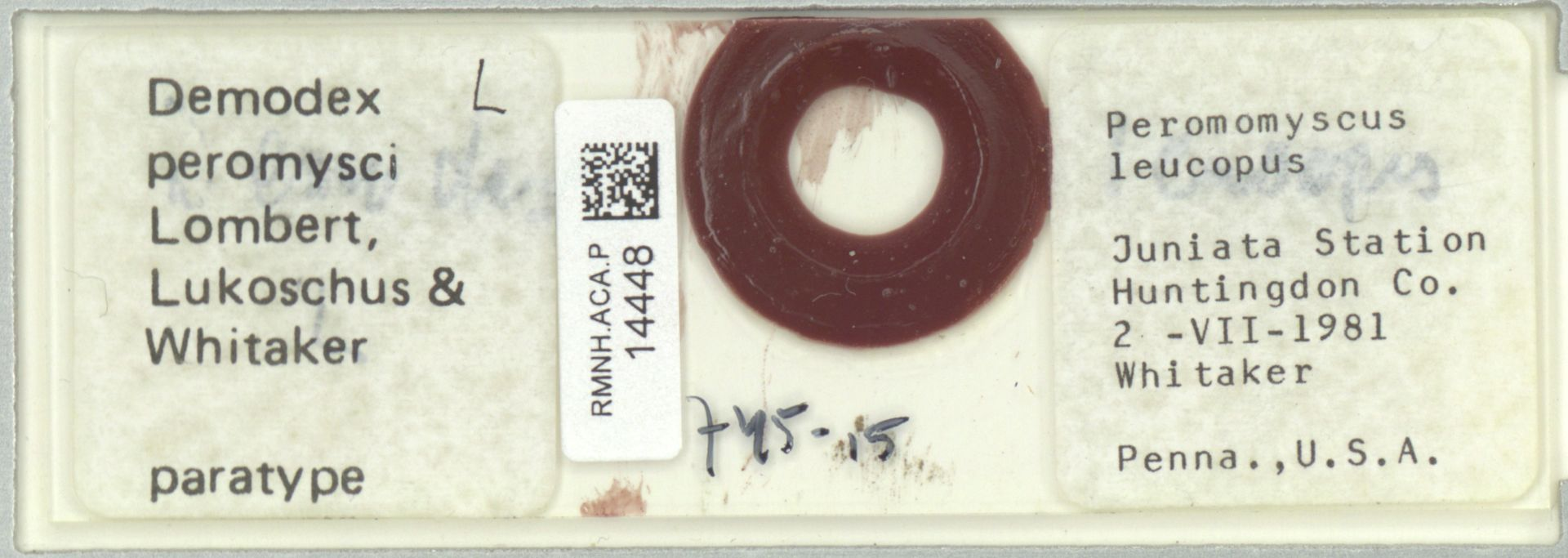 RMNH.ACA.P.14448 | Demodex peromysci