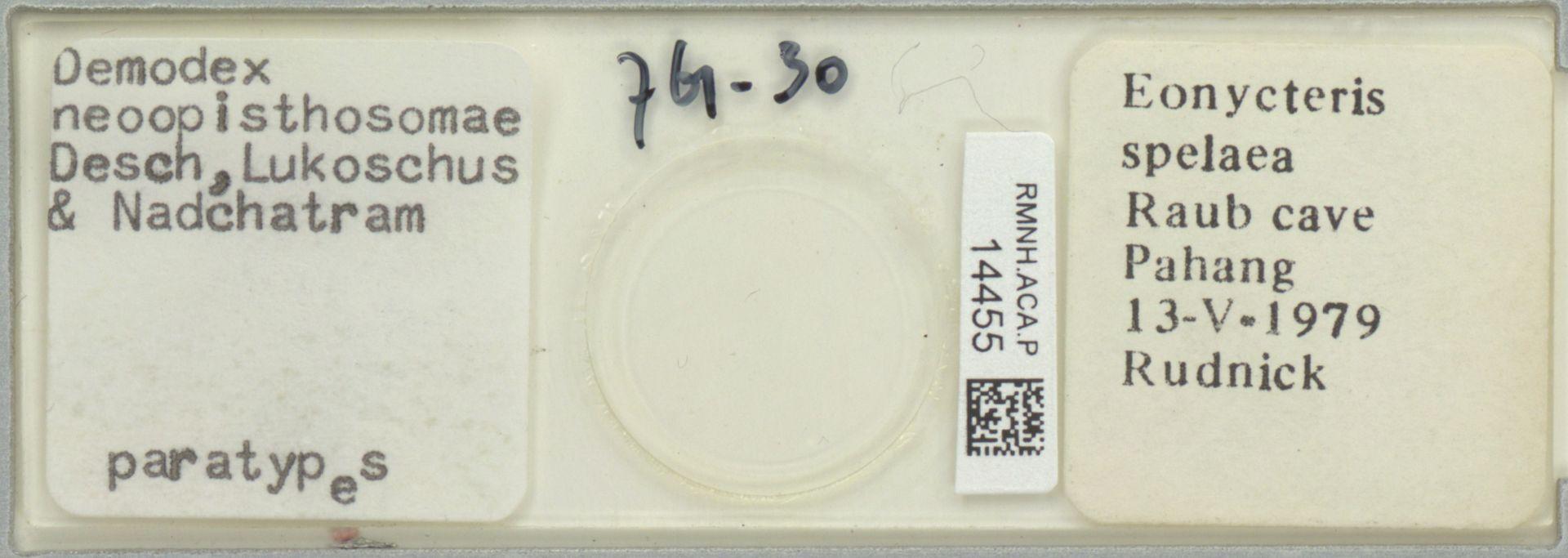 RMNH.ACA.P.14455 | Demodex neoopisthosomae