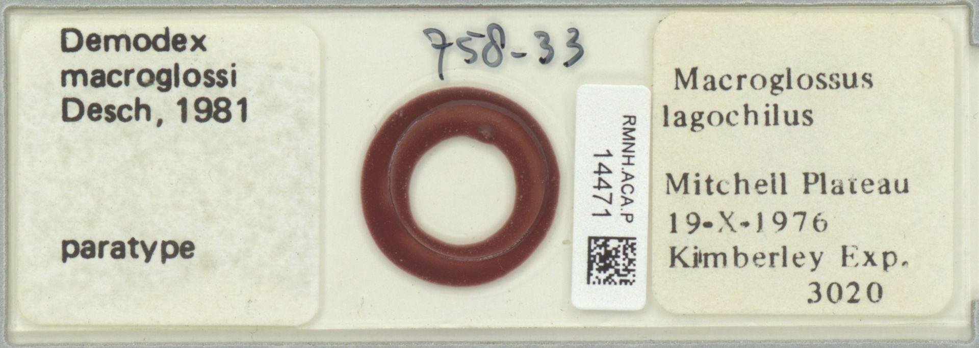 RMNH.ACA.P.14471 | Demodex macroglossi