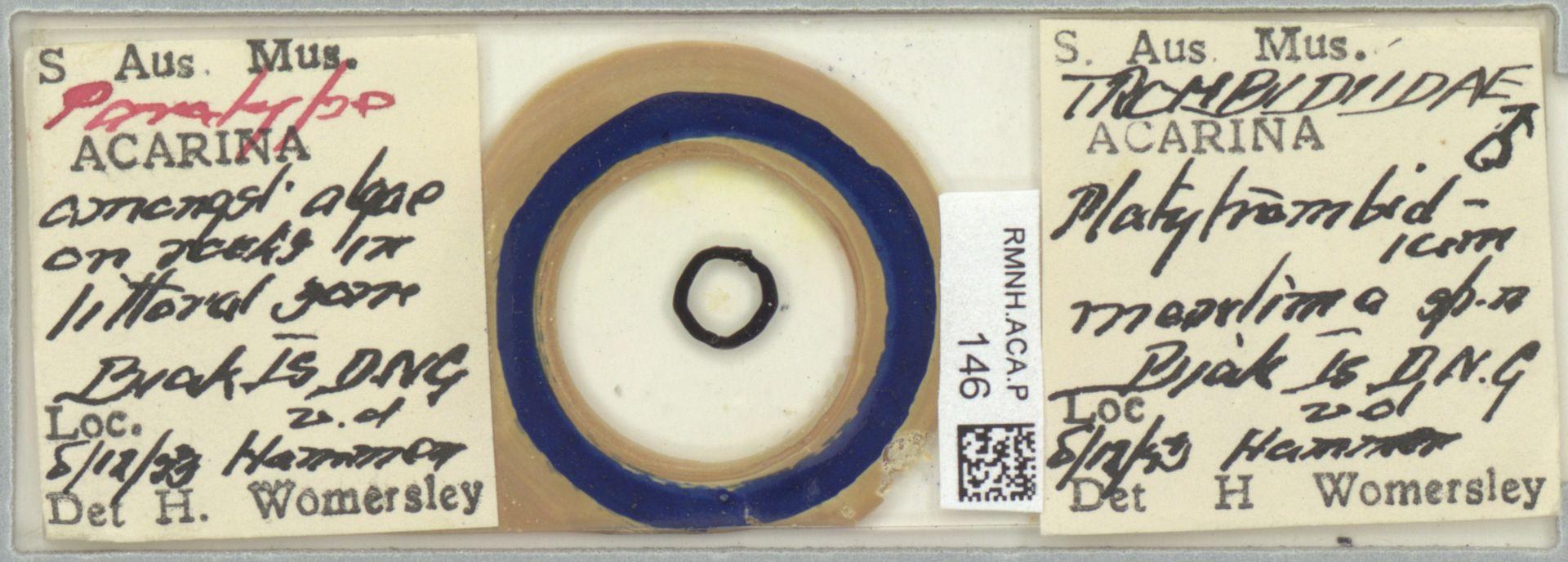 RMNH.ACA.P.146 | Platytrombidium maritimum Womersley