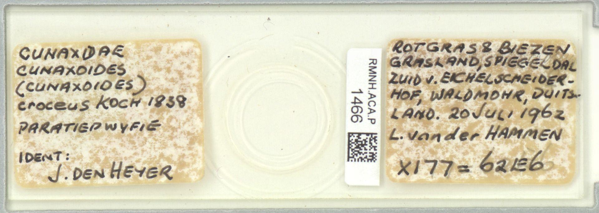 RMNH.ACA.P.1466   Cunaxoides (Cunaxoides) croceus C.L.Koch, 1838