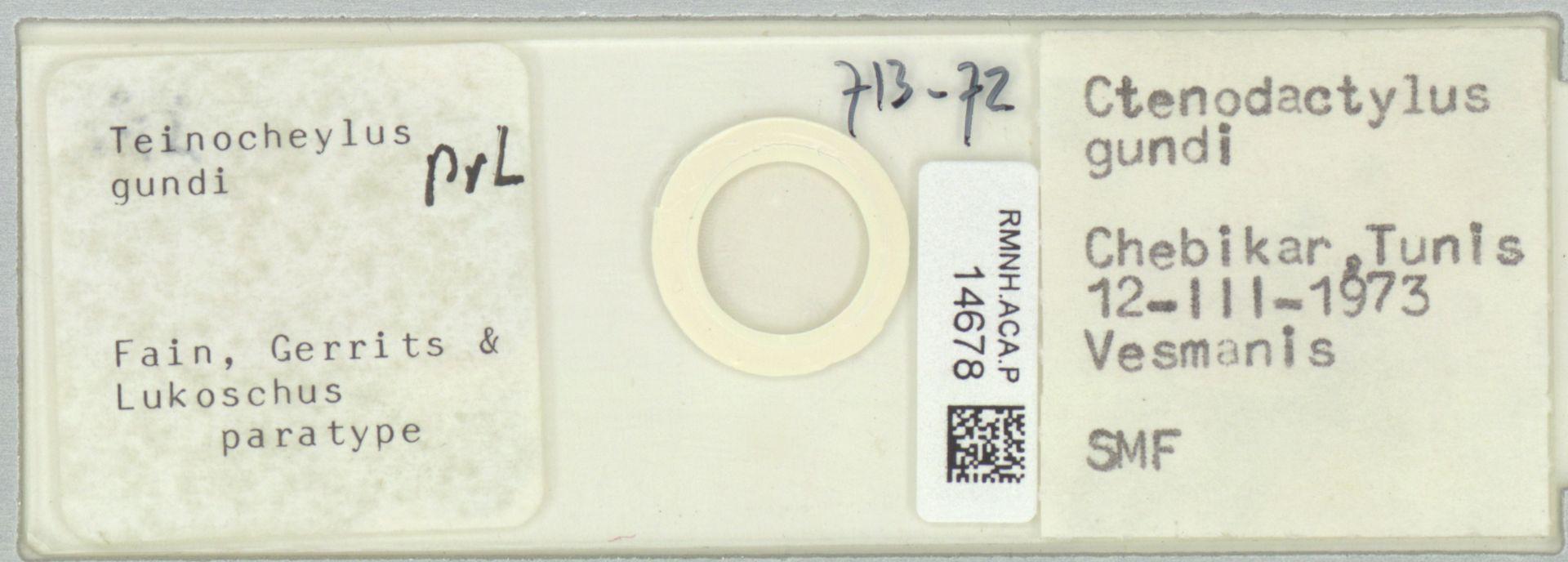 RMNH.ACA.P.14678 | Teinocheylus gundi