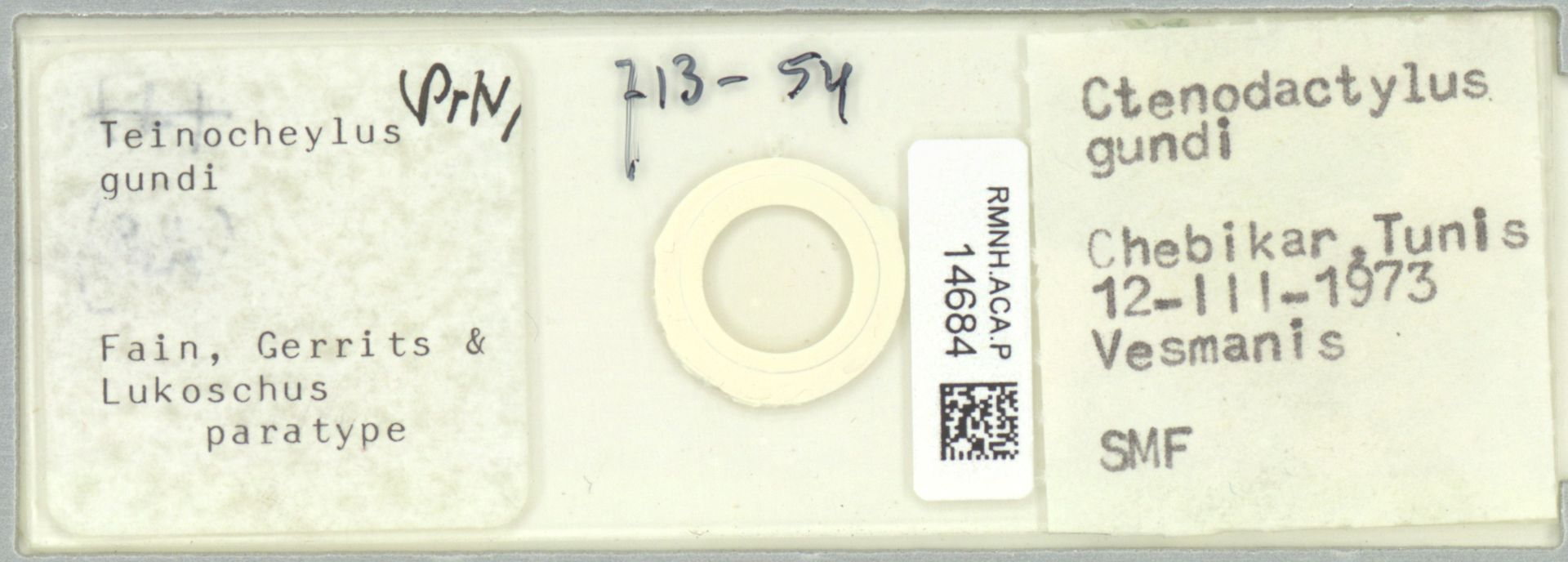 RMNH.ACA.P.14684 | Teinocheylus gundi