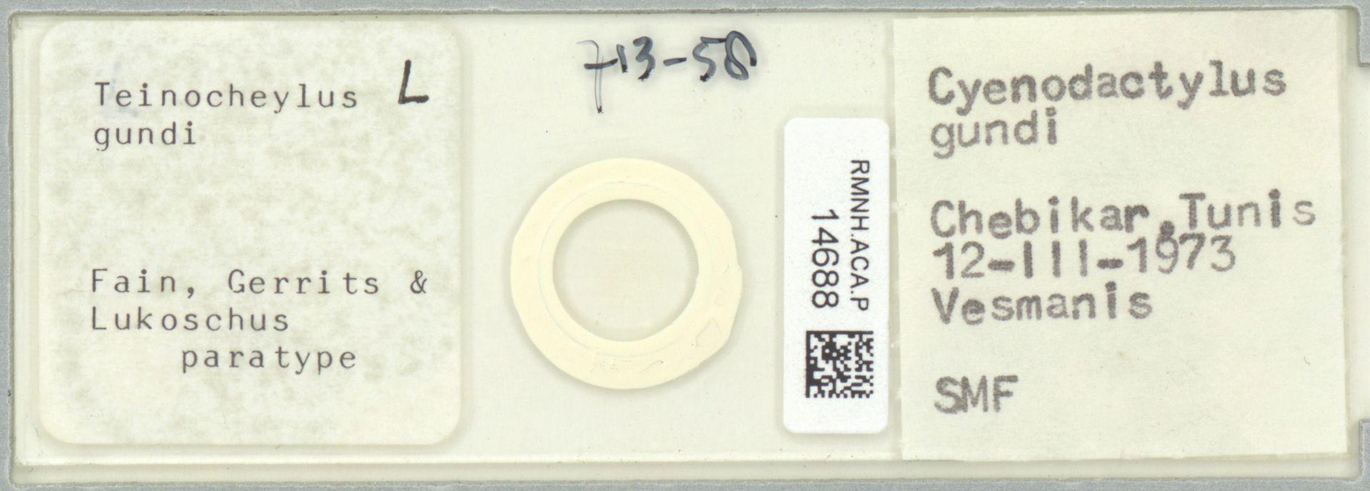 RMNH.ACA.P.14688   Teinocheylus gundi