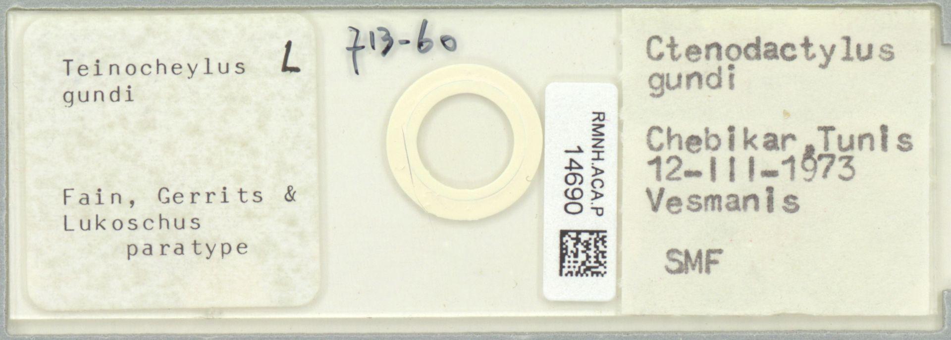 RMNH.ACA.P.14690 | Teinocheylus gundi
