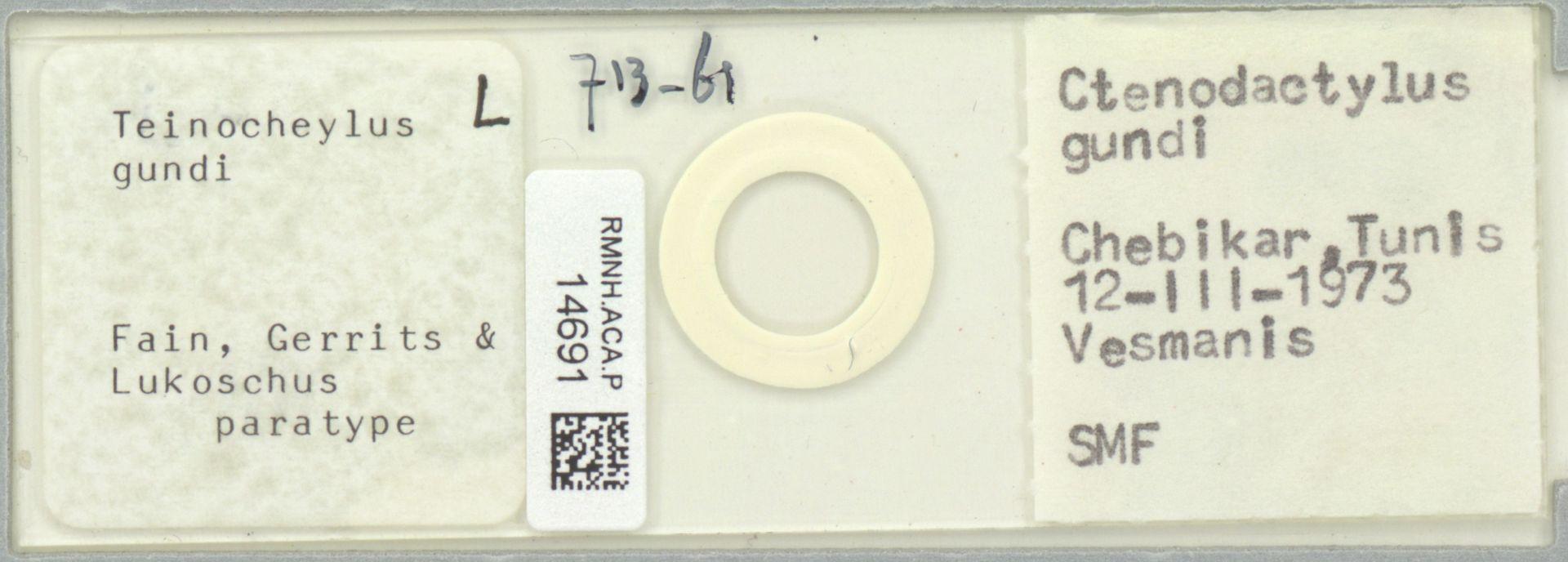 RMNH.ACA.P.14691 | Teinocheylus gundi