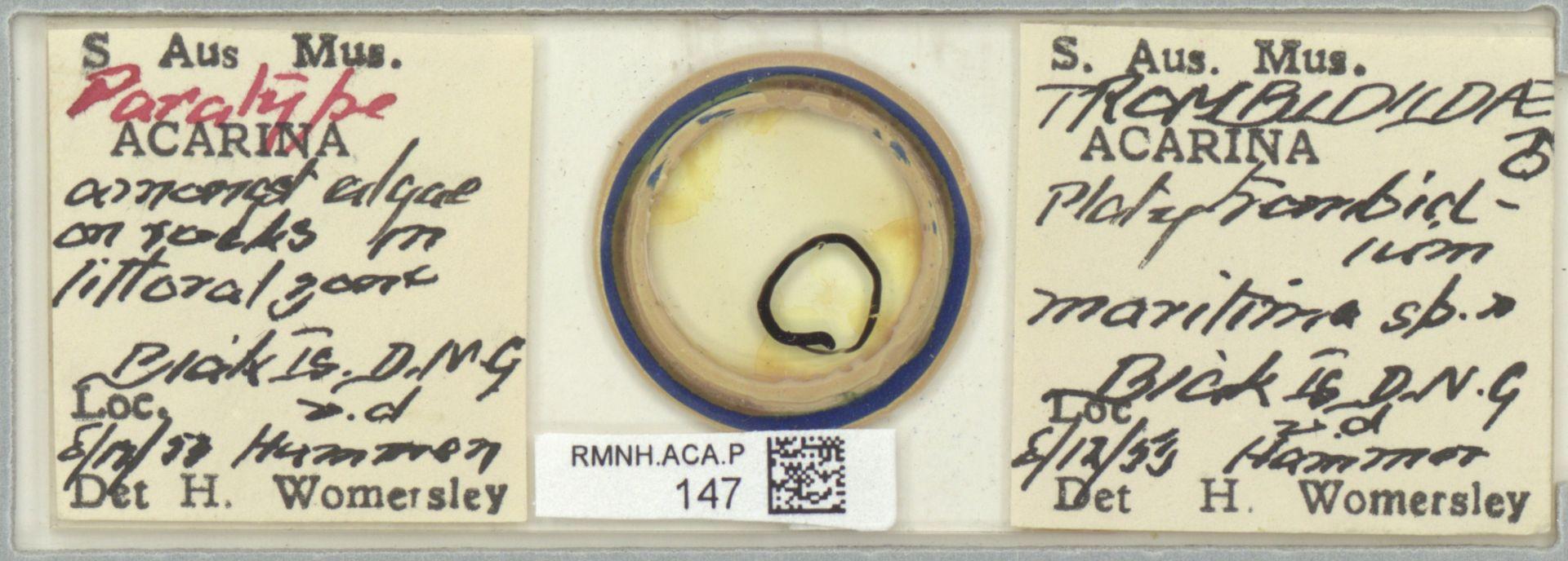 RMNH.ACA.P.147   Platytrombidium maritimum Womersley