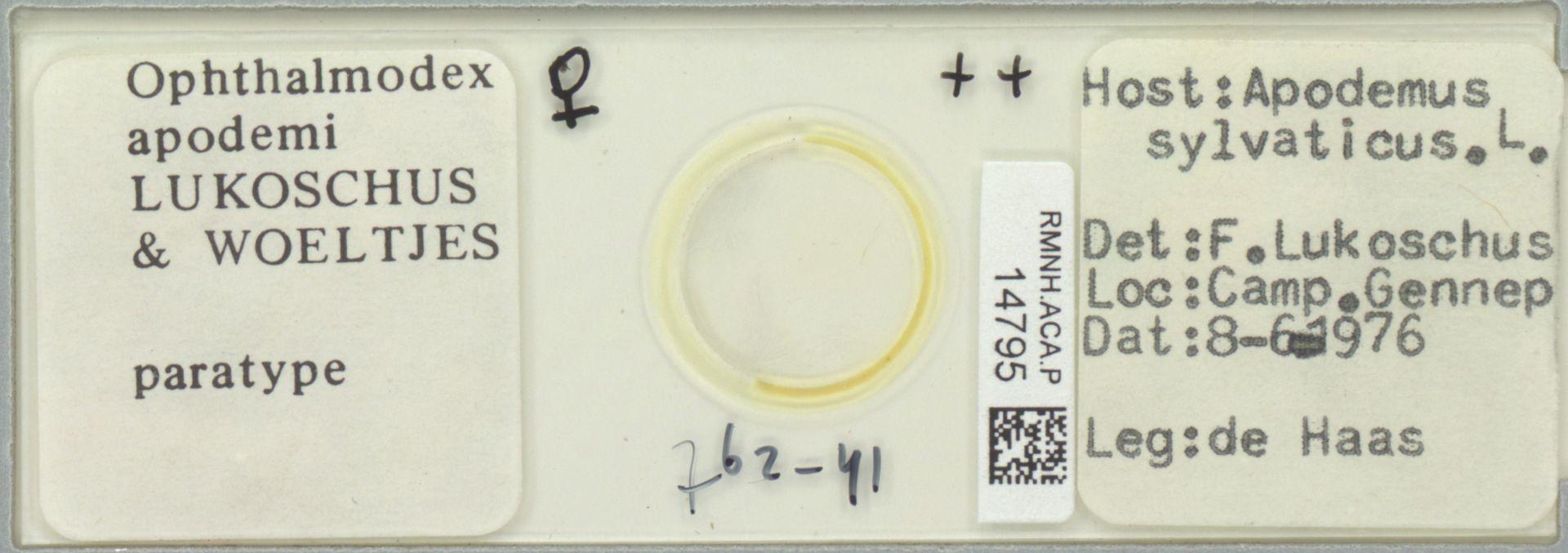 RMNH.ACA.P.14795 | Ophthalmodex apodemi