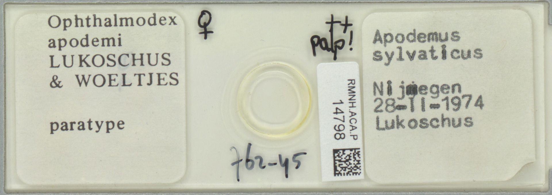 RMNH.ACA.P.14798 | Ophthalmodex apodemi