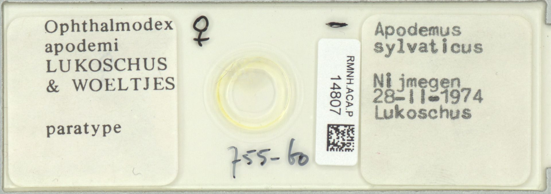 RMNH.ACA.P.14807 | Ophthalmodex apodemi