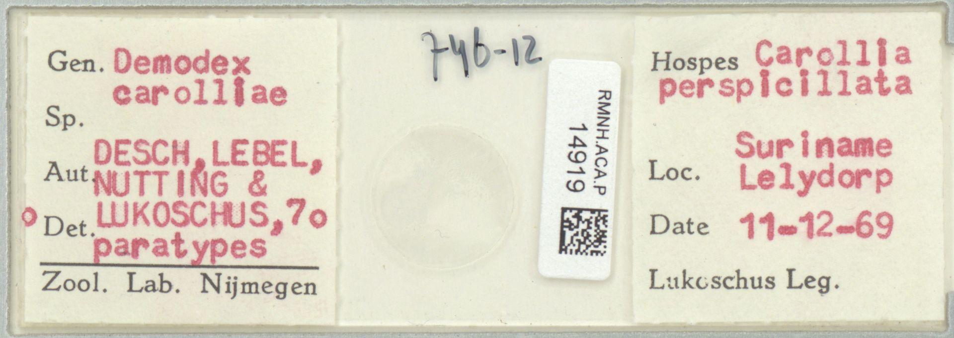 RMNH.ACA.P.14919   Demodex carolliae