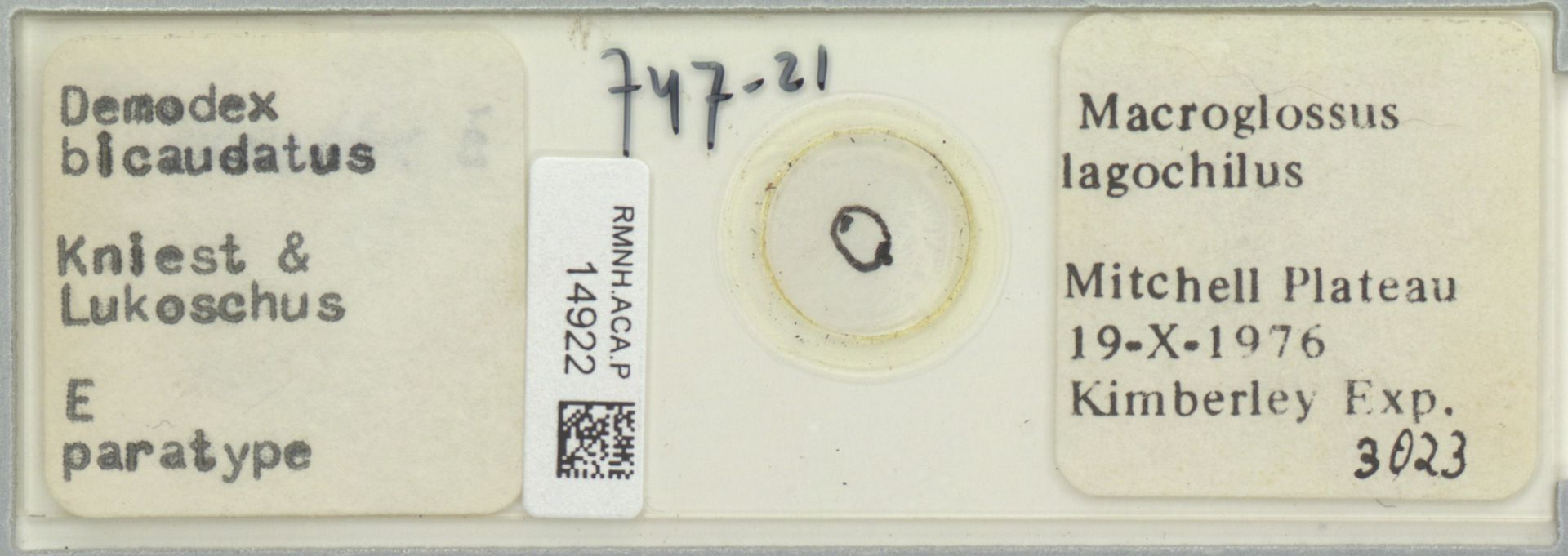 RMNH.ACA.P.14922 | Demodex bicaudatus