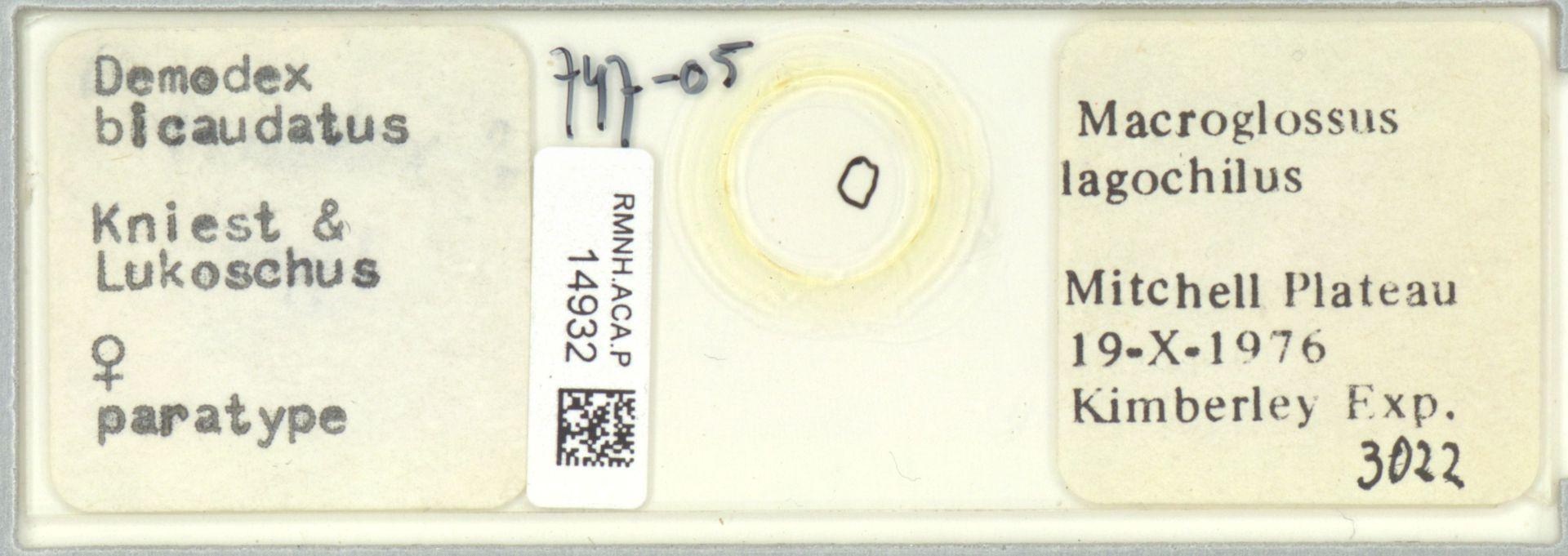 RMNH.ACA.P.14932 | Demodex bicaudatus