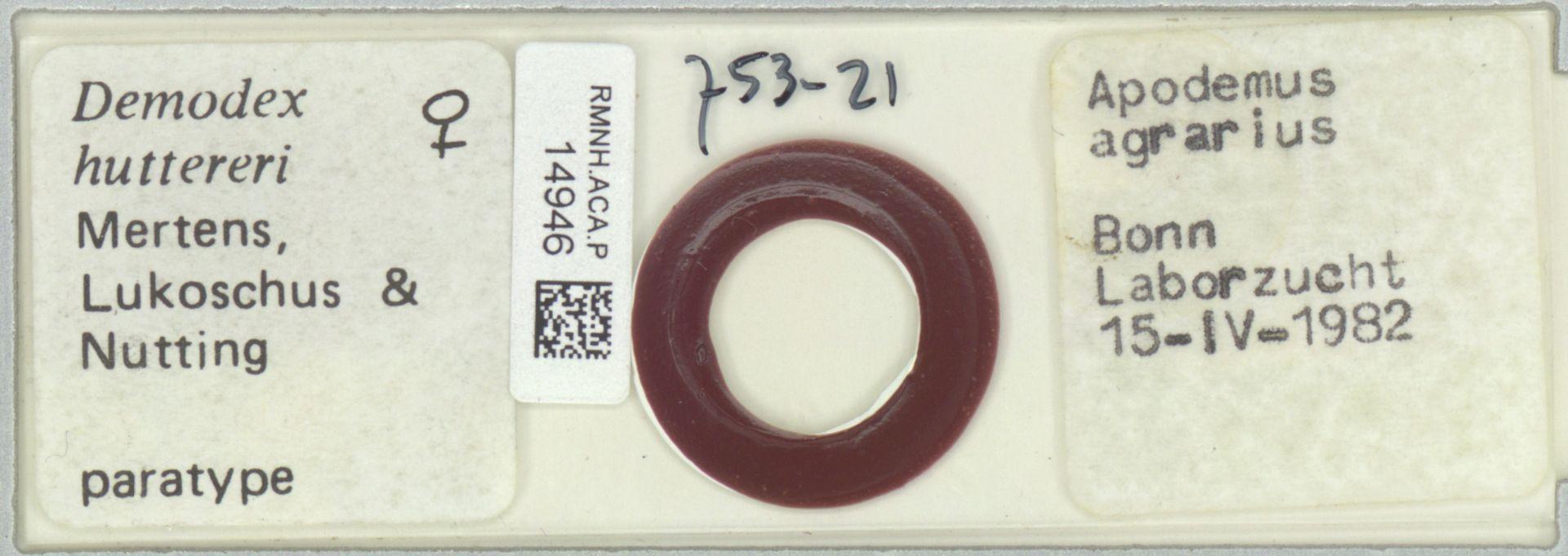 RMNH.ACA.P.14946 | Demodex hutteri