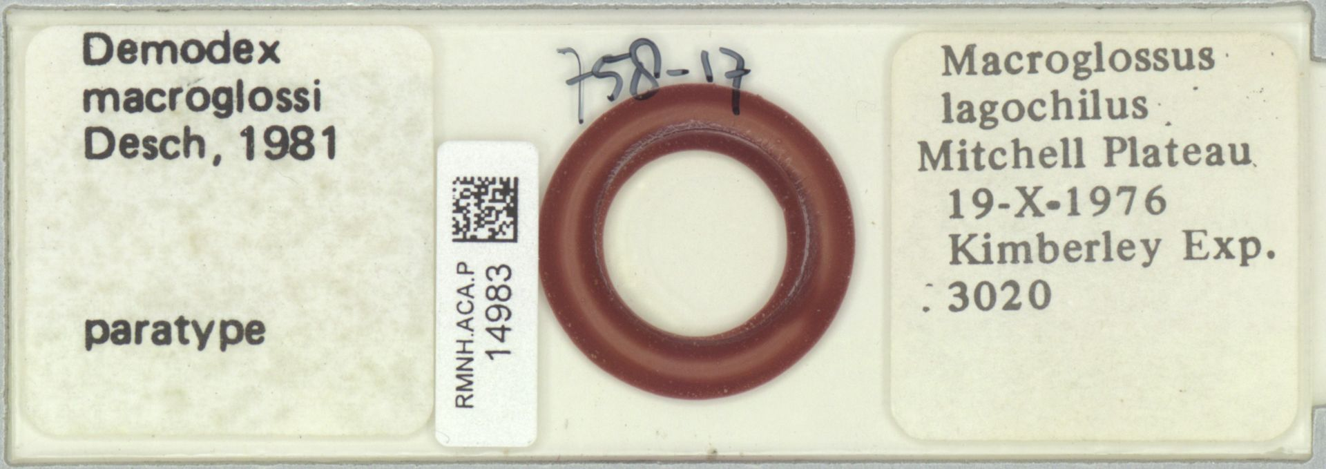 RMNH.ACA.P.14983 | Demodex macroglossi Desch, 1981