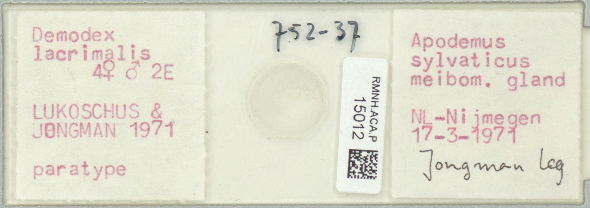 RMNH.ACA.P.15012 | Demodex lacrimalis Lukoschus & Jongman, 1971