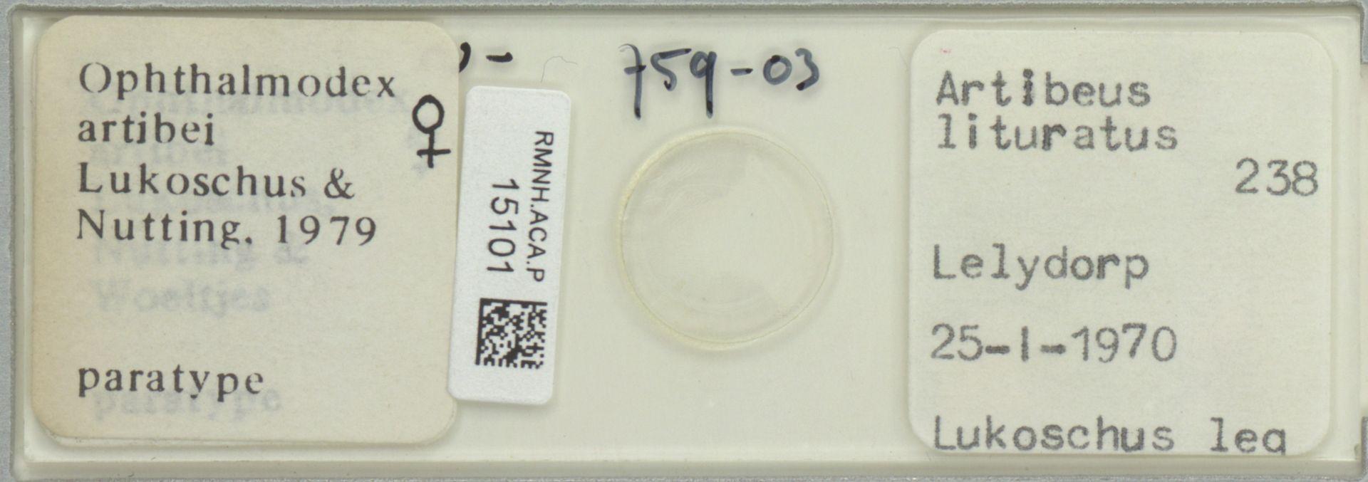 RMNH.ACA.P.15101   Ophthalmodex artibei Lukoschus & Nutting, 1979