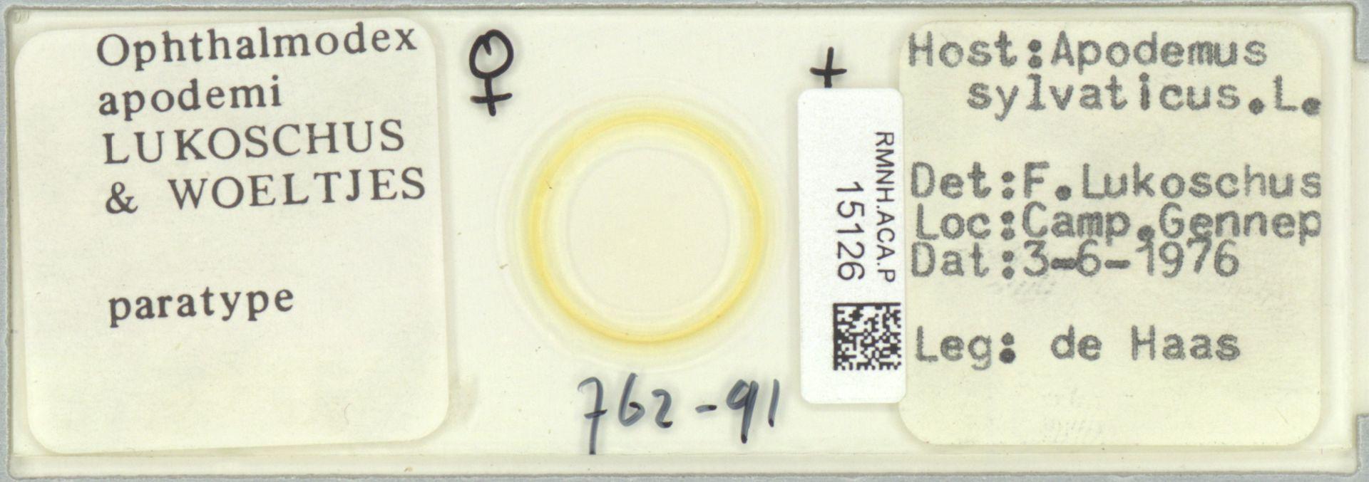 RMNH.ACA.P.15126 | Ophthalmodex apodemi Lukoschus & Woeltjes