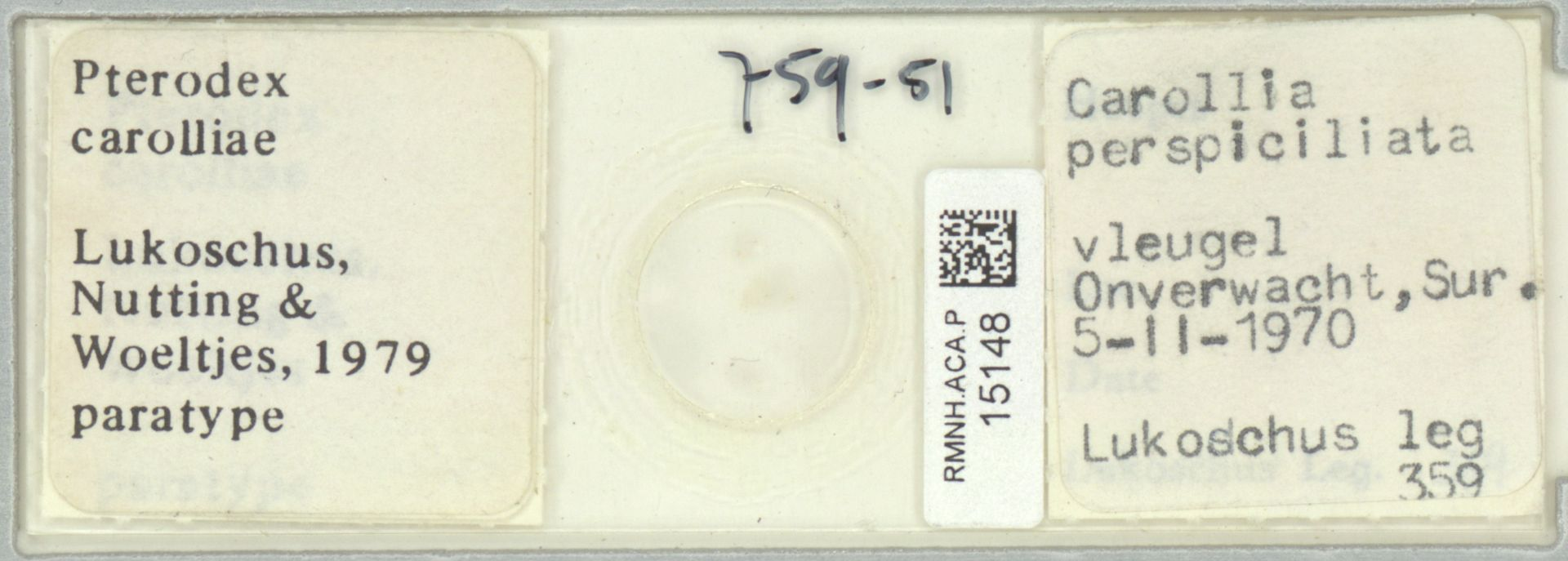 RMNH.ACA.P.15148   Pterodex carolliae