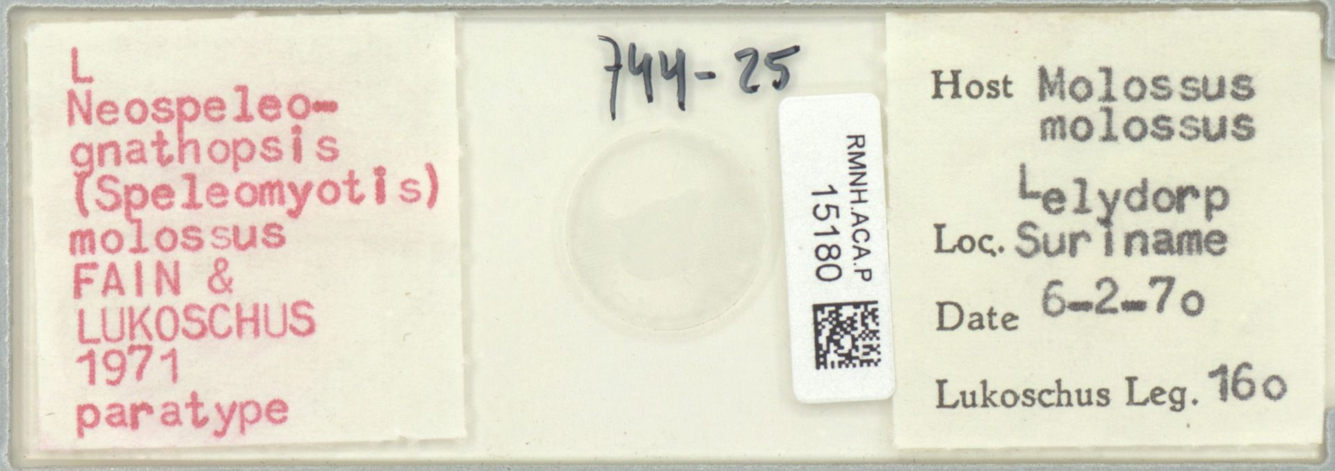 RMNH.ACA.P.15180 | Neospeleognathopsis molossus