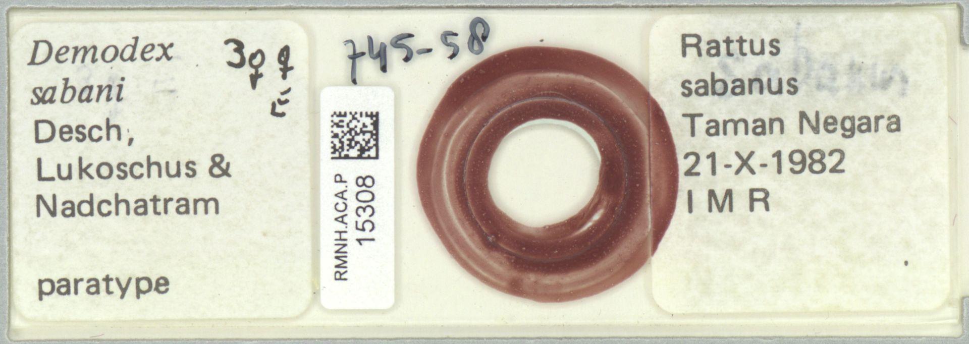RMNH.ACA.P.15308   Demodex sabani