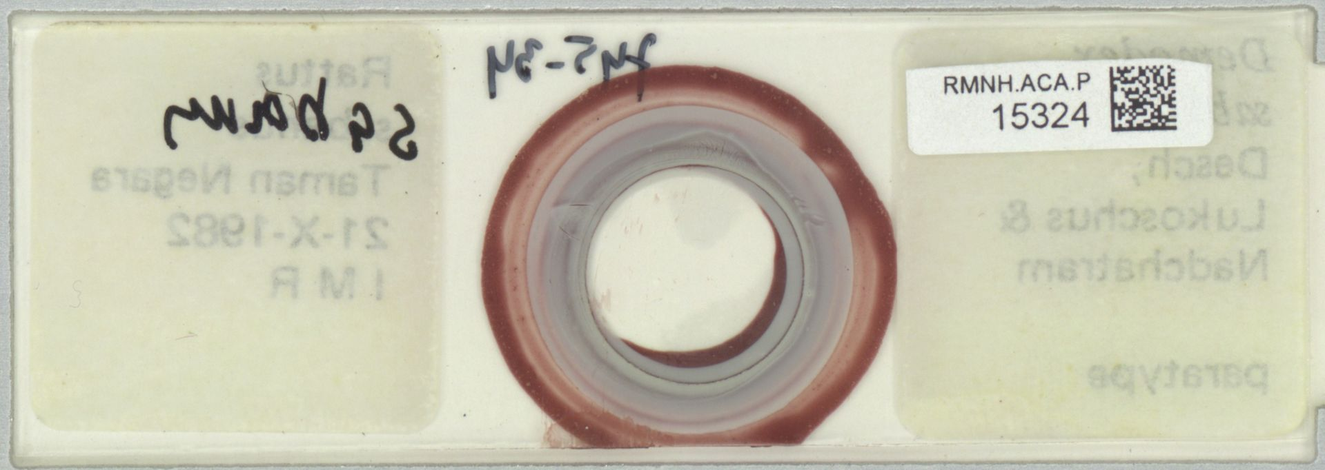 RMNH.ACA.P.15324 | Demodex sabani
