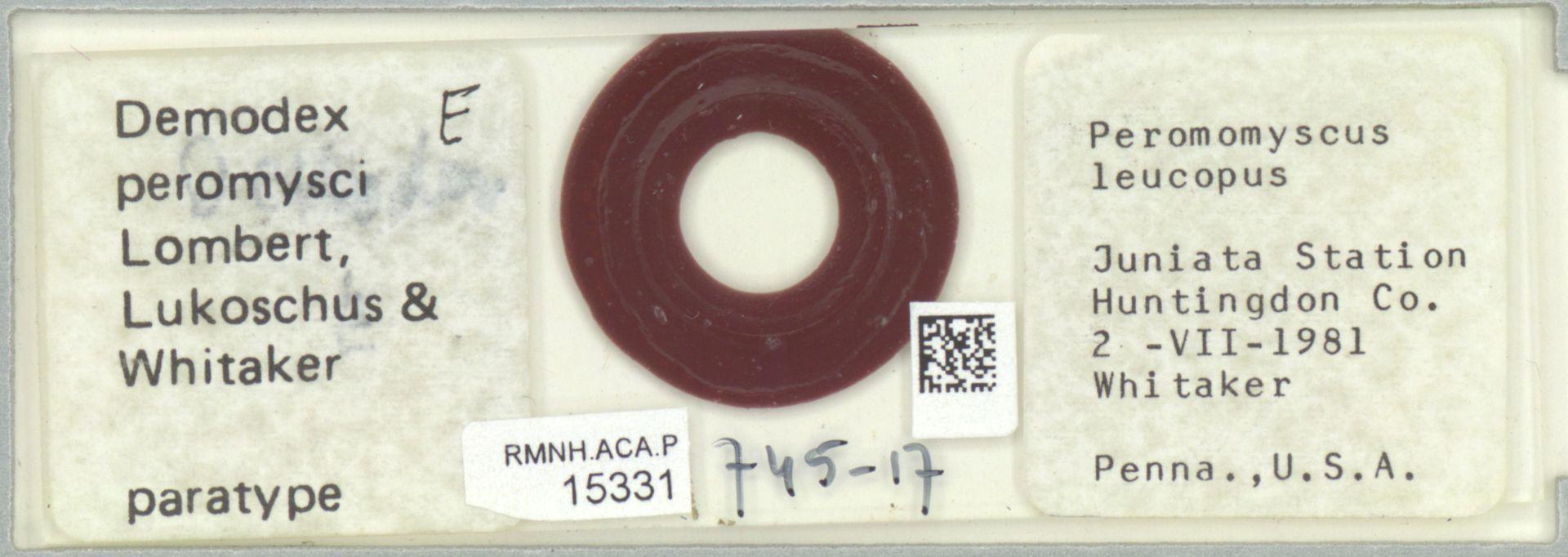 RMNH.ACA.P.15331 | Demodex peromysci