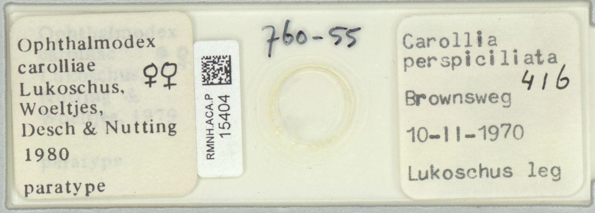 RMNH.ACA.P.15404 | Ophthalmodex carolliae