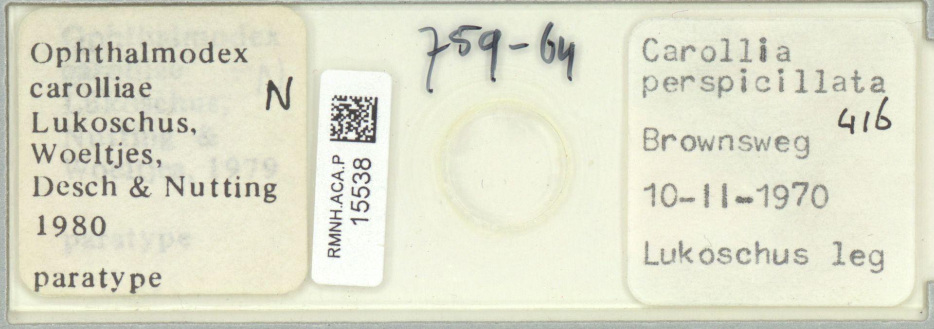RMNH.ACA.P.15538   Ophthalmodex carolliae