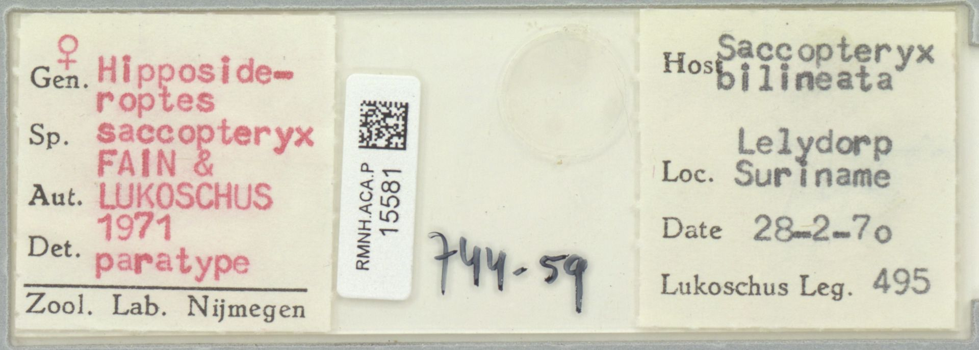 RMNH.ACA.P.15581 | Hipposideroptes saccopteryx