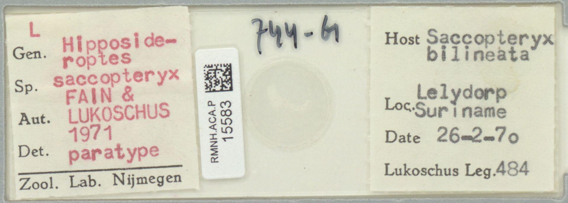 RMNH.ACA.P.15583   Hipposideroptes saccopteryx