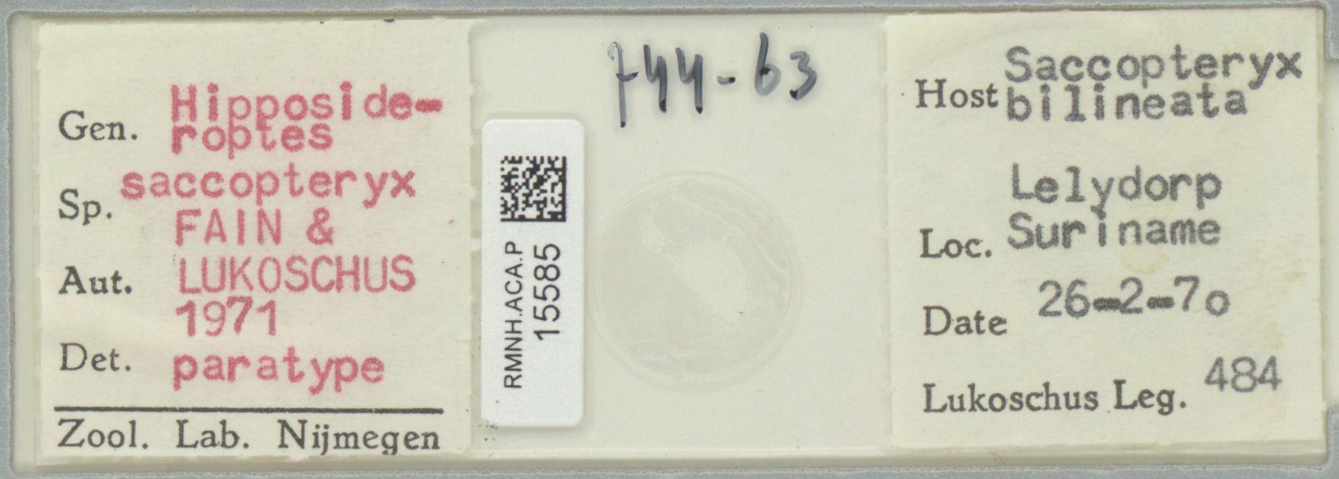 RMNH.ACA.P.15585 | Hipposideroptes saccopteryx