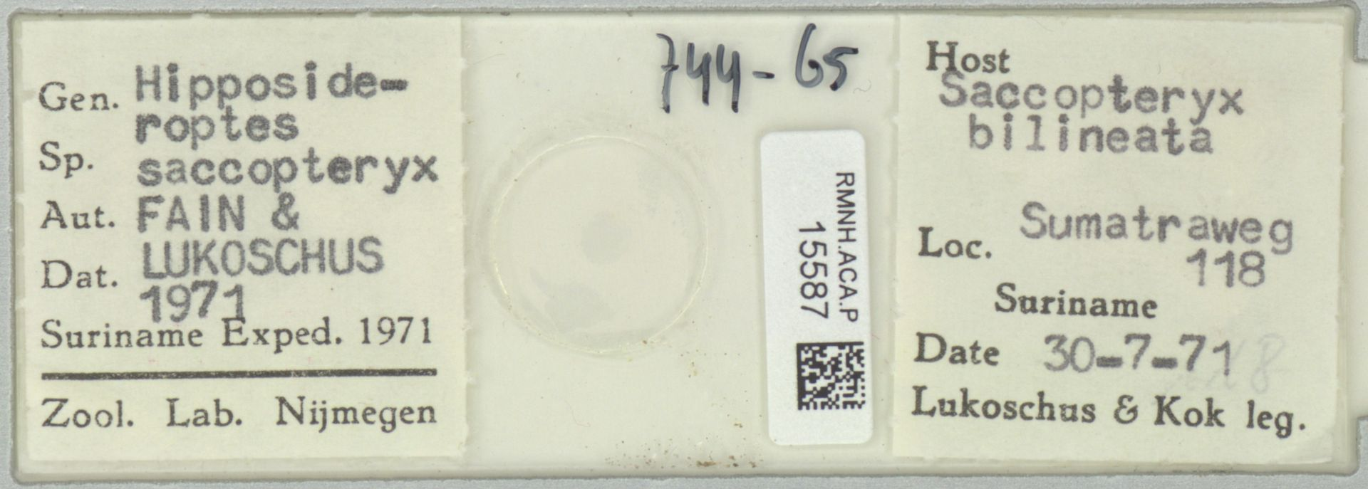 RMNH.ACA.P.15587 | Hipposideroptes saccopteryx