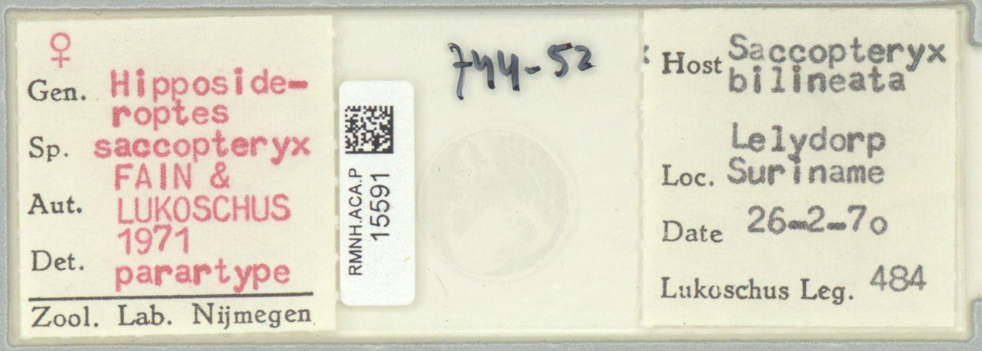 RMNH.ACA.P.15591 | Hipposideroptes saccopteryx