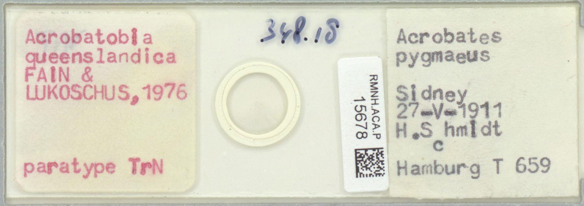 RMNH.ACA.P.15678 | Acrobatobia queenslandica Fain & Lukoschus, 1976