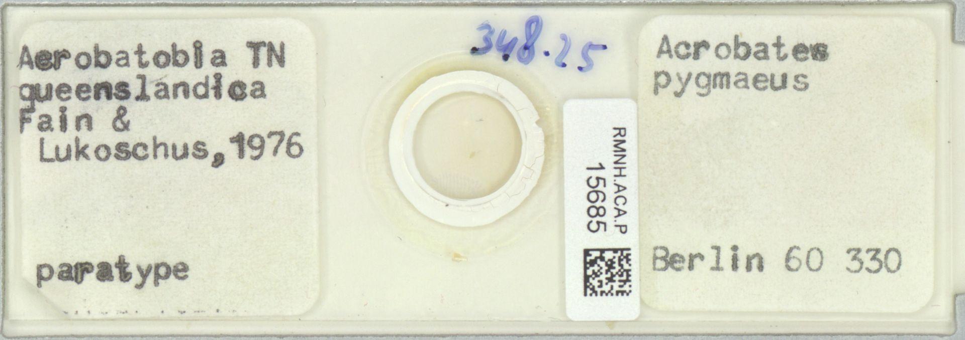 RMNH.ACA.P.15685   Acrobatobia queenslandica Fain & Lukoschus, 1976