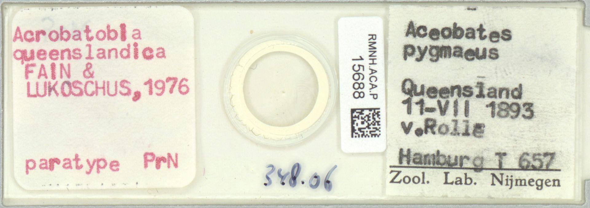 RMNH.ACA.P.15688   Acrobatobia queenslandica Fain & Lukoschus, 1976