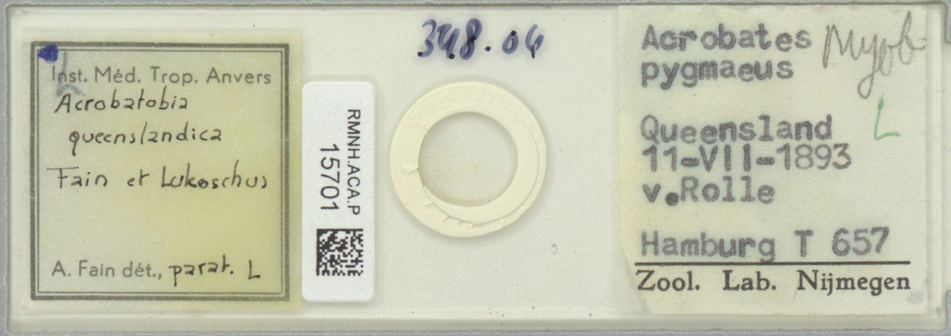 RMNH.ACA.P.15701 | Acrobatobia queenslandica Fain & Lukoschus, 1976