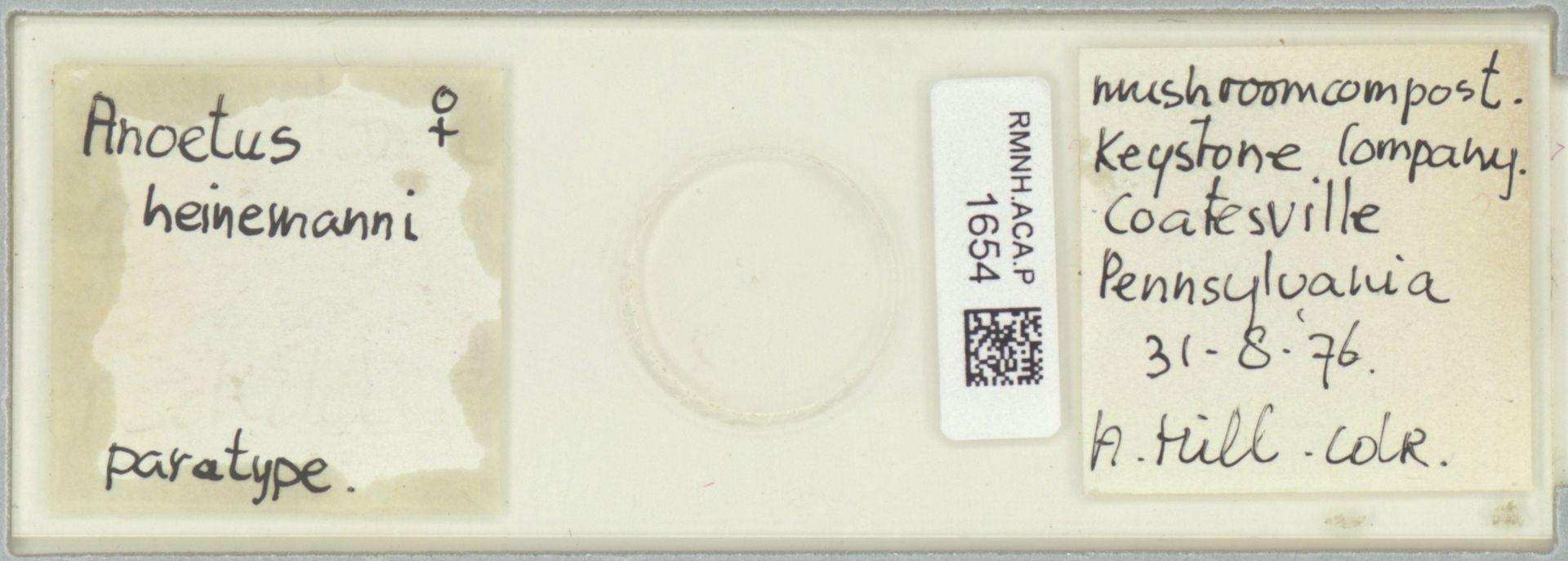 RMNH.ACA.P.1654 | Anoetus heinemanni A. Hill