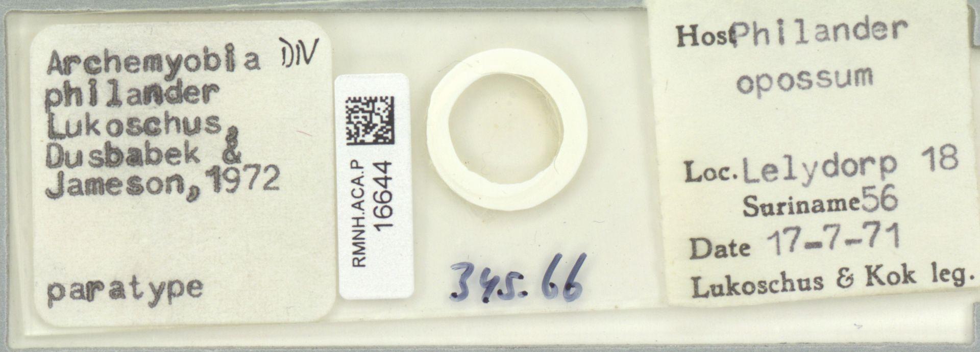 RMNH.ACA.P.16644 | Archemyobia philander