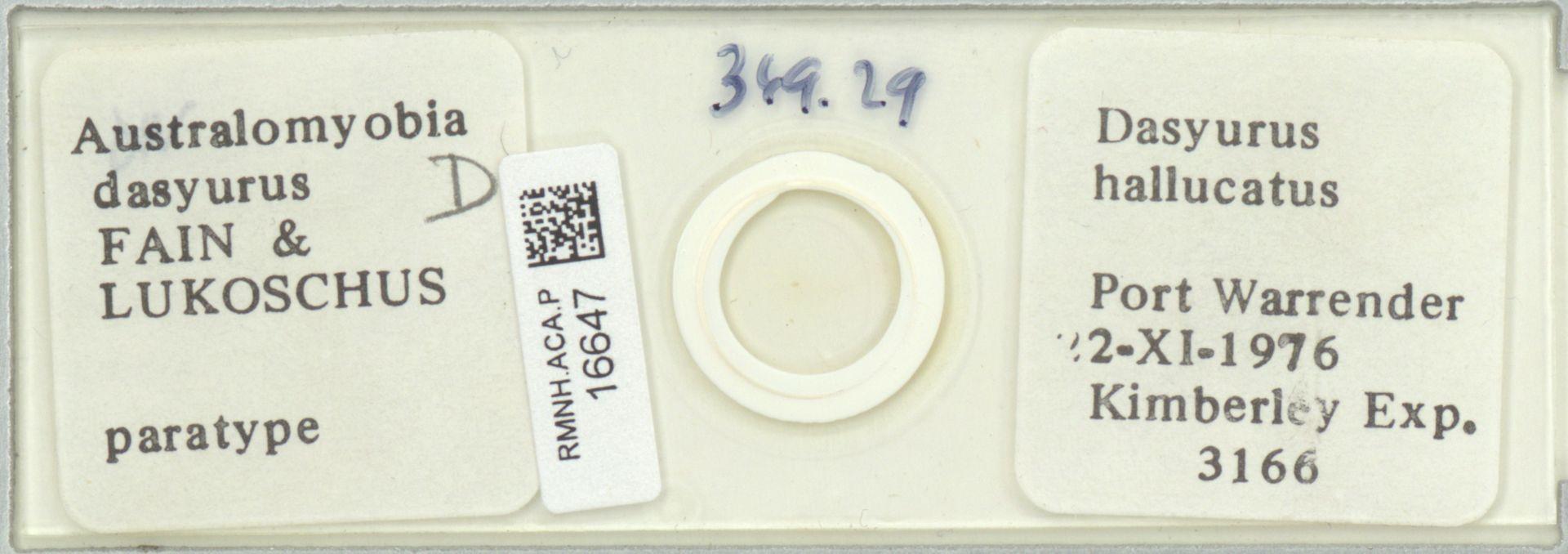 RMNH.ACA.P.16647 | Australomyobia dasyurus