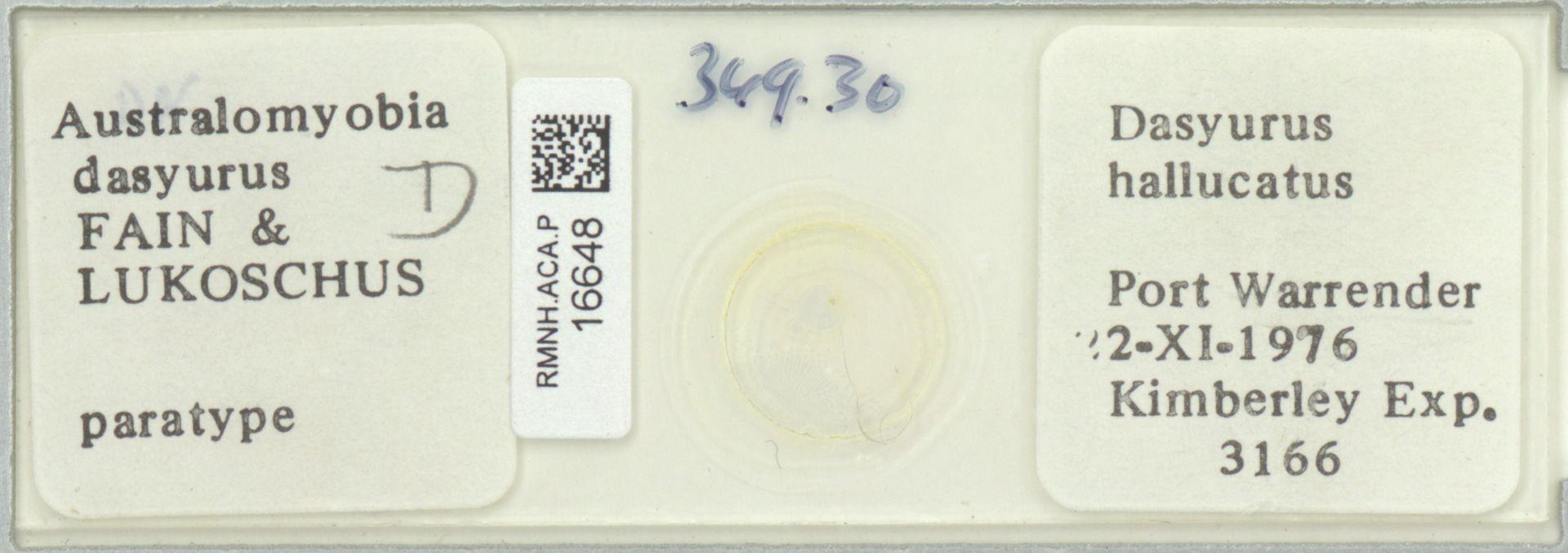 RMNH.ACA.P.16648 | Australomyobia dasyurus